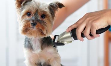 Tondeuse toilettage pour chiens et chats