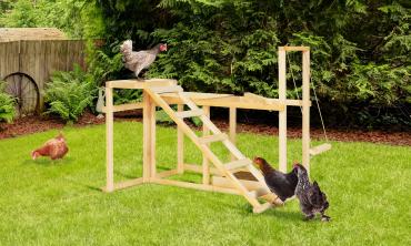 Aire de jeux pour poules