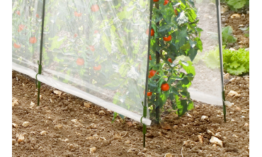 EASY GROW - Serre à tomates