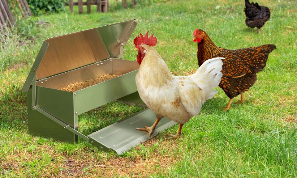 Mangeoire automatique pour poules