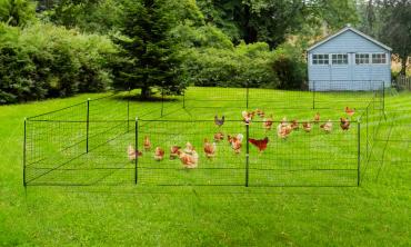 Kit clôture Nomade pour poules 50 m²